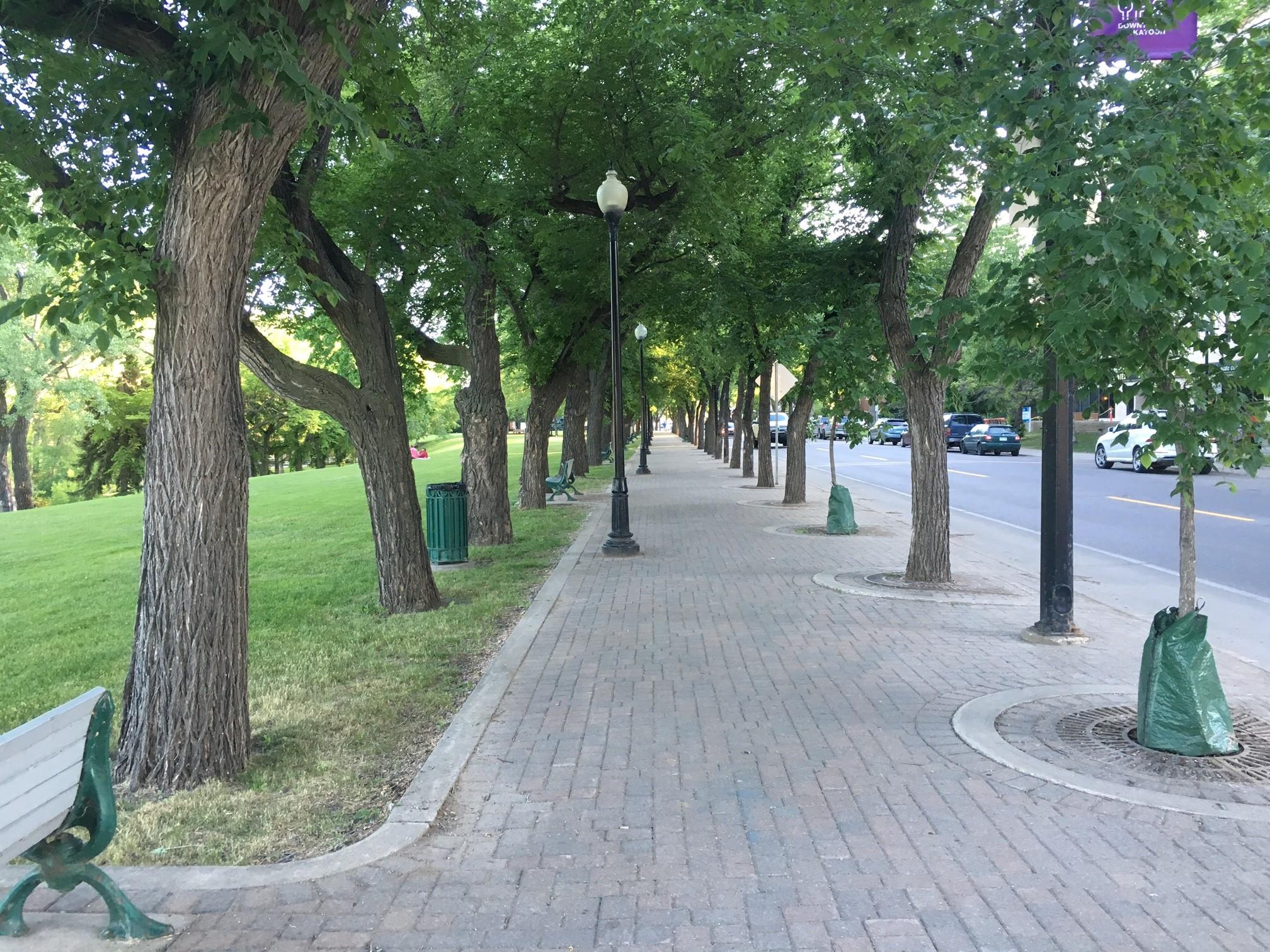 Saskatoon Treed Streets